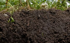cross-section of healthy soil and plants