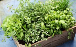 wooden box filled with cut fresh herbs