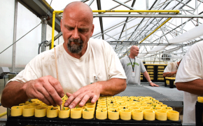 male prisoner gardening in greenhouse