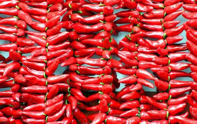 Rows and rows of hot red chili peppers.