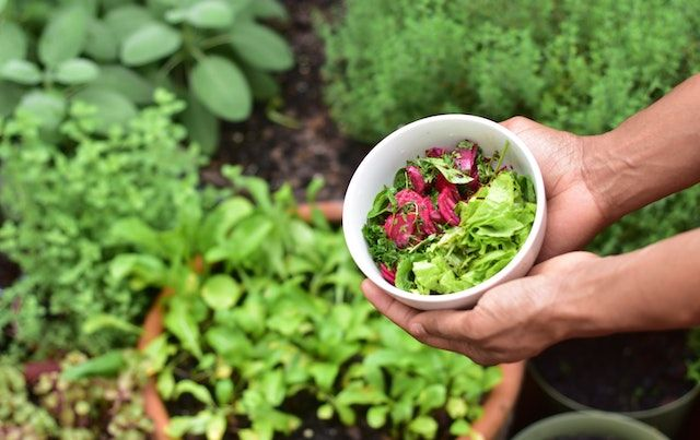 Hands holding bowl of salad vegetables with garden in background