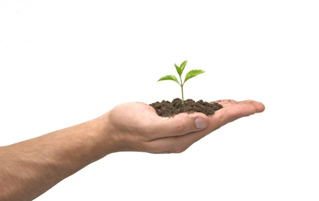 hand holding soil and small seedling