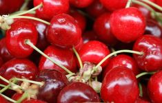 close up on cherries with stems