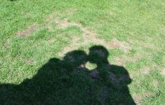 the shadow on green grass of two people kissing