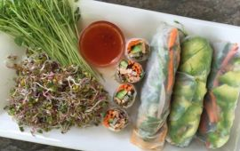 fresh Vietnamese summer rolls on white plate with sprouts and sauce