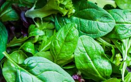 Close up on dark leafy greens in salad mix.